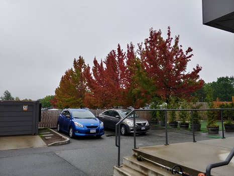 Autumnal Equinx Trees